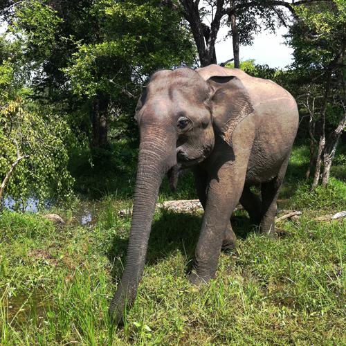 elephan-jalla