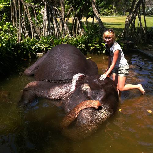 приют для слонов в Шри-Ланке, кататься на слонах Шри-Ланка, слоны Шри-Ланка, кататься на слонах на шриланке