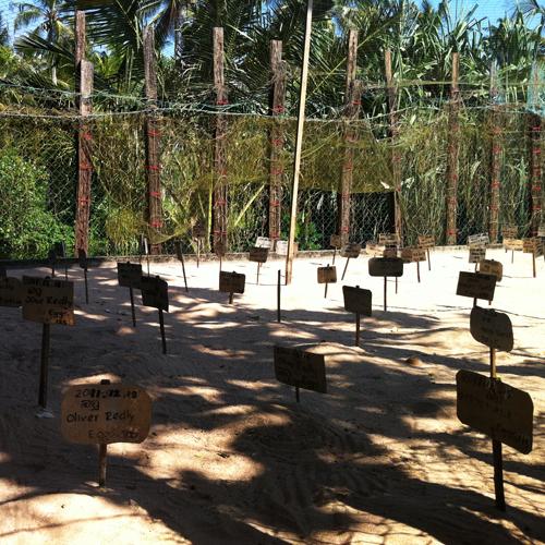 turtle farm sri lanka, черепашья ферма, черепашечья ферма, Шри-Ланка, шриланка, шри-ланка, шри ланка, ферма черепах на шри-ланке
