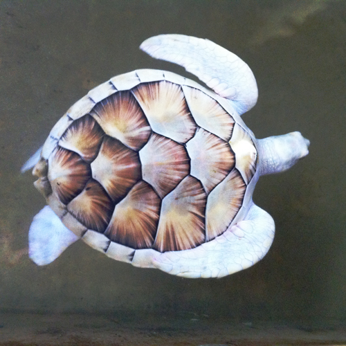 turtle_farm_sri_lanka